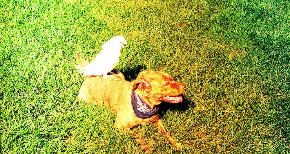 Dog Training Camp Jacksonville Fl