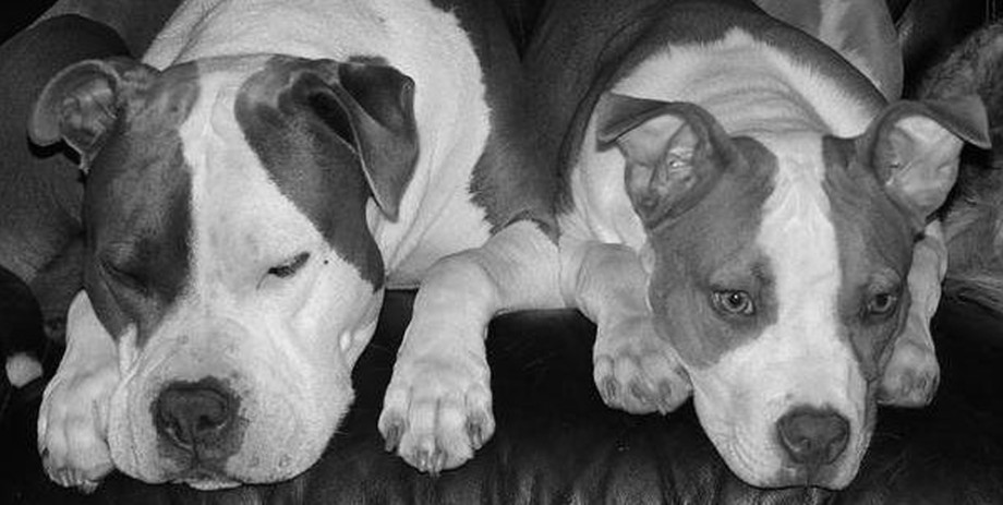 Two dogs in Black and White photo
