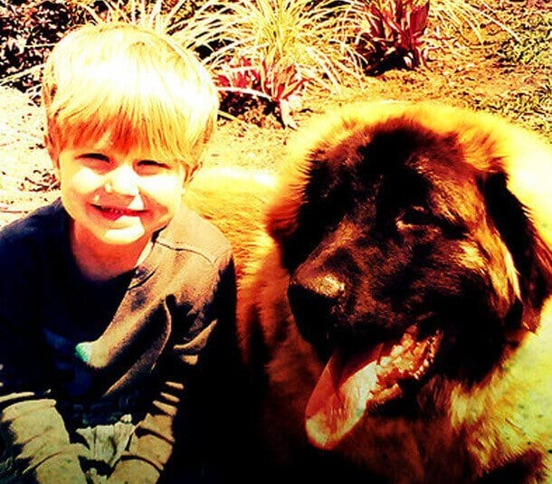 Huge Mastiff Dog with a little boy