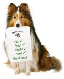 Dog Training Classes Jacksonville FL