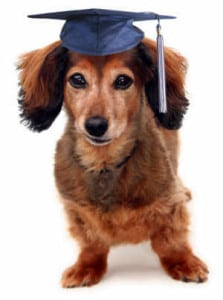 Dog Training Classes Jacksonville FL
