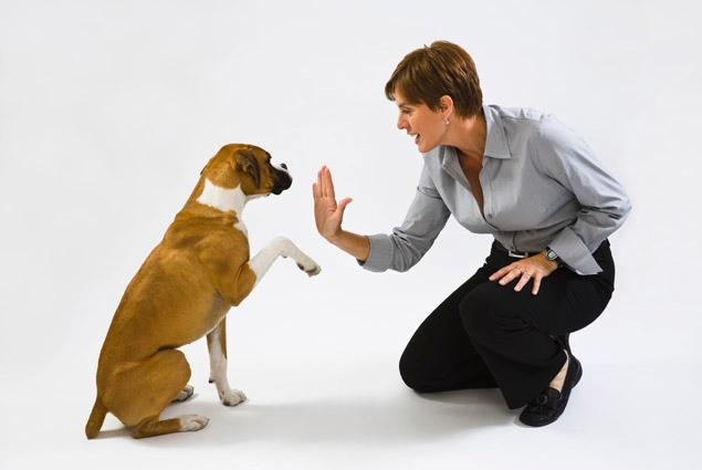 How To Make Your Dog Obedient