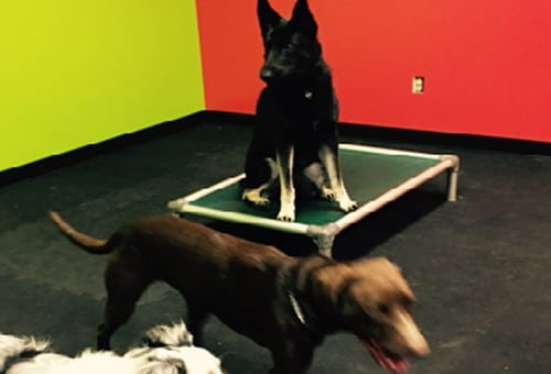 dogs in daycare