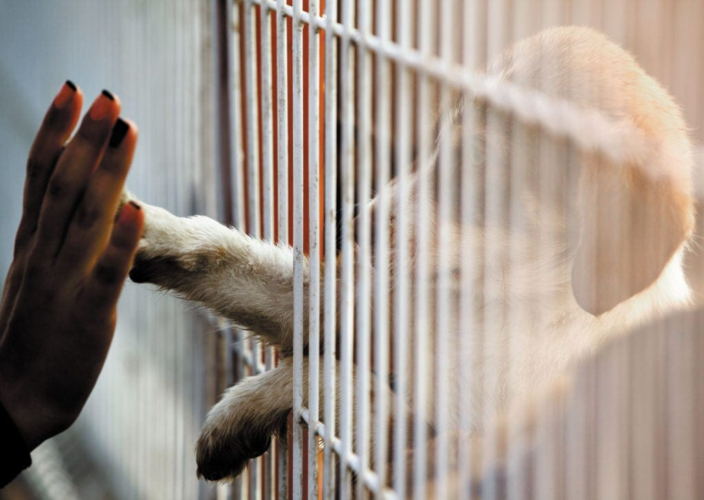 person and dog touching hands between bars