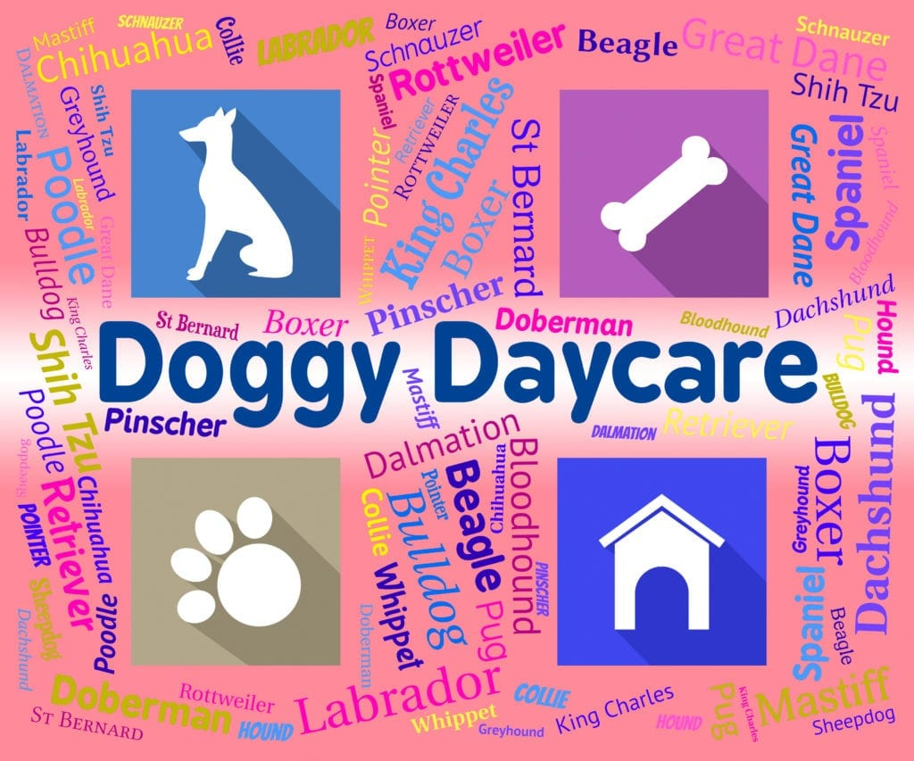 Dog names and doggie daycare