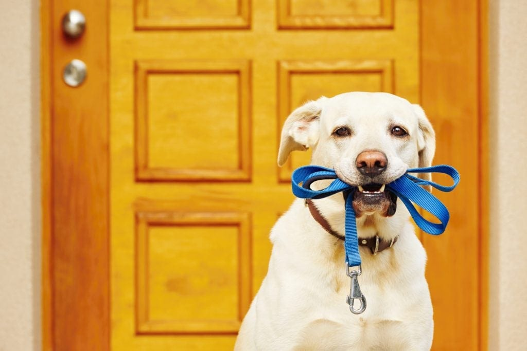 Blog Dog Training Tips Latest News Unleash Fido