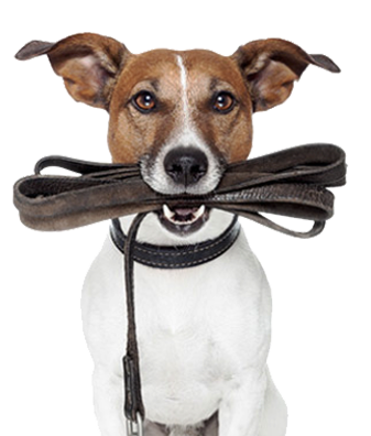 mixed breed dog with leash on mouth