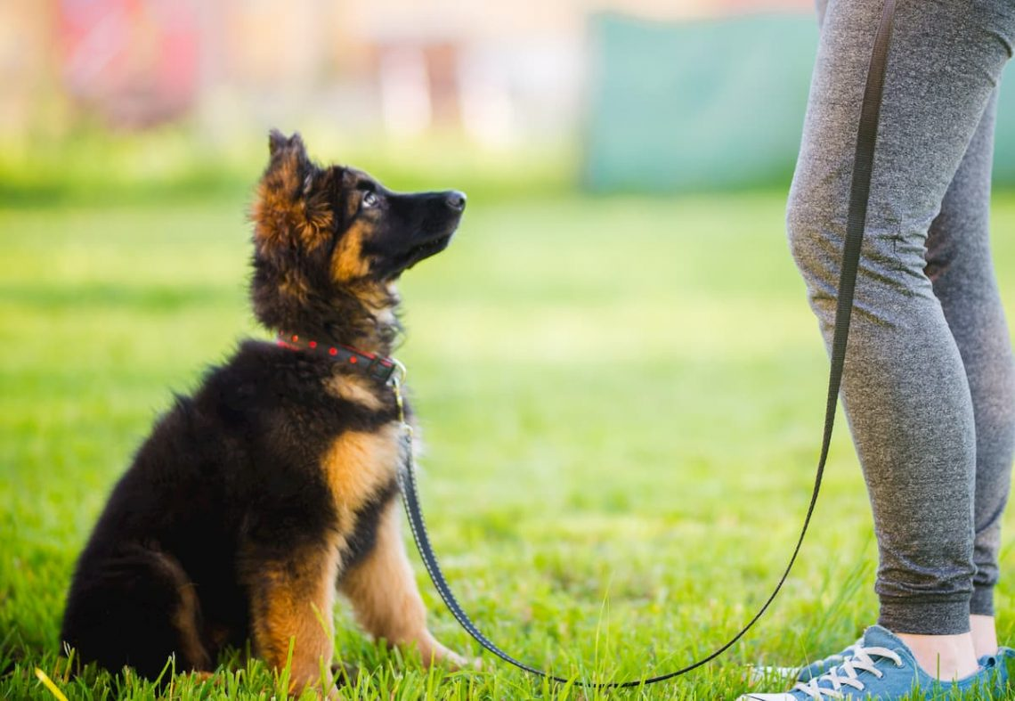 dog obedience training Tampa