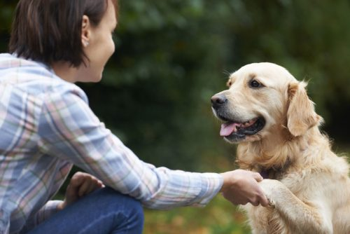 Pet-Golden-Retriever-And-Owner-Playing-Outside-Together