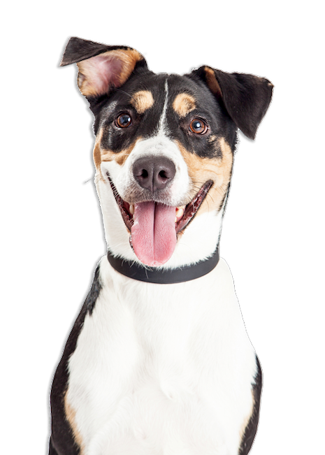 cute and happy dog