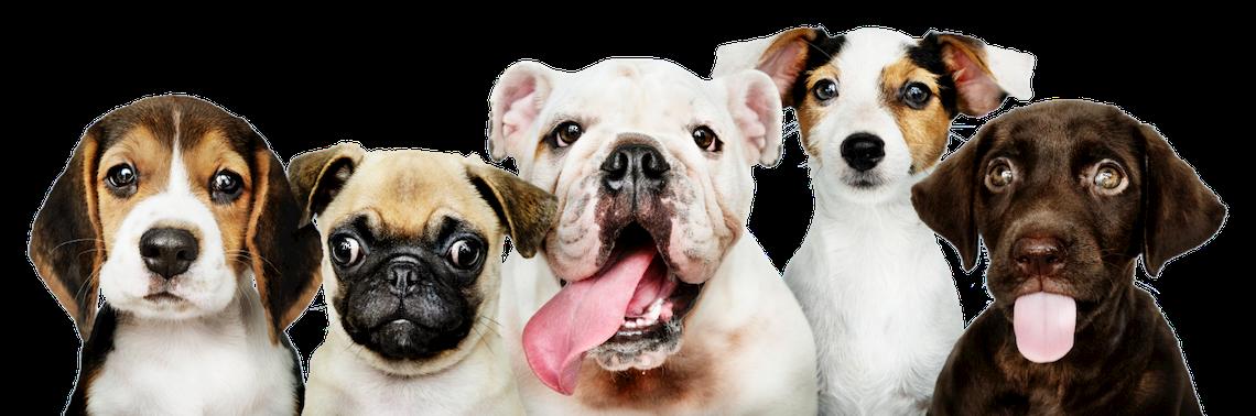 5 puppies
